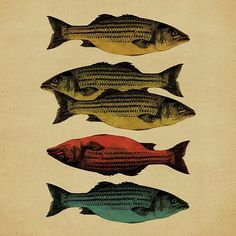 One fish, two fish . . .