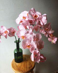 Phaleanopsis Dreams in our Girro Handmade Bottle ✨ Orchids, Glass Vase, Wedding Flowers, Meditation, Dreams, Weddings, Bottle, Plants, Handmade