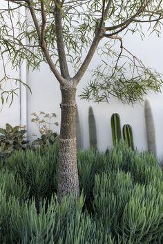 Houses Awards Outdoor Plants, Outdoor Gardens, Outdoor Spaces, Courtyard Gardens, Outdoor Living, Garden Landscape Design, Landscape Architecture, Architectural Plants, H Design