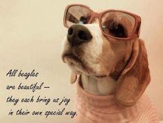 All beagles are beautiful