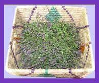 Lapaix Herb Farm  http://www.lapaixherbfarm.com/