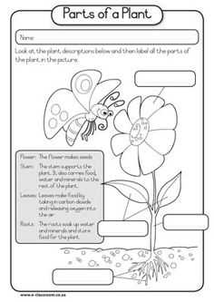 Printables Parts Of A Plant Worksheet parts of a plant cell science vocabulary worksheet c1 w9