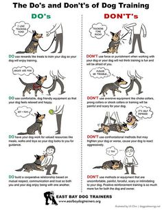 The Do's and Dont's of Dog Training [www.braveheartdogtraining.com]