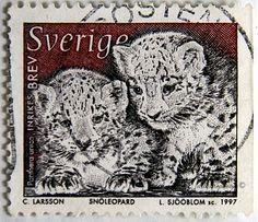 Sweden.  WILD ANIMALS.  PANTHERA UNICA CUBS.  Scott 2222 A671, Issued 1997 Feb 28, Engr., Perf. 13 on 3 sides. /ldb.