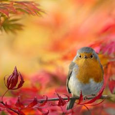 Autumn fantasy 2 by Teuni Stevense, via 500px-sweet bird and beautiful background colours!!