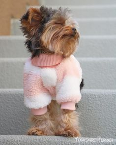 ✔ Cute Dogs And Puppies Yorkshire Terrier Yorkies, Yorkie Puppy, Chien Yorkshire Terrier, Yorkshire Terrier Haircut, Cute Dogs And Puppies, I Love Dogs, Free Puppies, Cute Baby Animals, Funny Animals