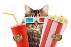 Great Kitten London: The first cat cinema