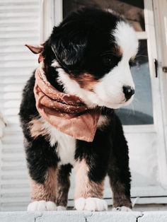 Newest Free of Charge bernese mountain dogs and baby Ideas For upwards of several years, a Bernese Mountain Dog has become a essence of park life with Switzerland Cute Dogs And Puppies, I Love Dogs, Doggies, Puppies Stuff, Pet Dogs, Aussie Puppies, Doggy Stuff, Cute Little Animals, Cute Creatures