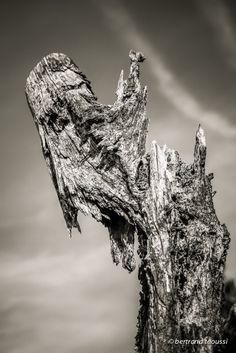 Dans le bois dormant aux sirènes impudiques on entend les clameurs pales des souches cannibales. Les racines dénudées provoquent des causeries, elles évoquent le temps des jeunes pousses et le vent d'hiver qui les mangent quand vient la nuit. Ces momies insomniaques déchirent mon cœur comme le cri silencieux d'une peinture de Munch. BT  http://bertrand-taoussi-photo.blogspot.fr/2014/03/le-cri.html