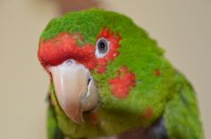 Protect aviculture to preserve bird species! #thecavalrygroup