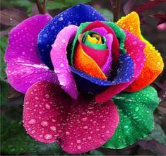 Exotic iris | Rosas-exoticas-arcoiris-negras-verdes-etcmdn_MLM-F-4193013025_042013