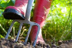 ZielonyKLIK: Czerwiec w ogrodzie - jakie prace nas czekają