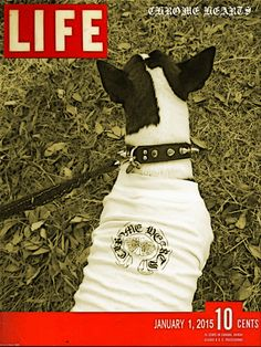 M:Bull terrier (chobee) 1