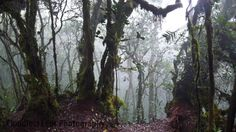 Mossy Forest by ~cloudlesslens on deviantART