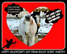 "www.rockyacreshorserescue.weebly.com Help a horse. Please like and share help us spread the word. Since we opened our doors we have 2 or 3 calls a day from people wanting to place animals with us. We still need to stock up on more hay for the newcomers this week. We have everything lined up, but we're still a few dollars short. If you could find it in your heart to help us out a bit would be awesome. Visit our site and go to the ""How You can Help"" page"