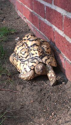 Traveling tortoise - shell pattern for design inspiration