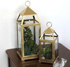 DIY Lantern Terrarium - Make Yours Today!