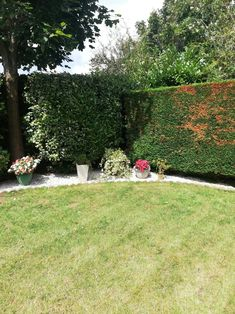 Wish we had a before shot. However thie section of the garden we maintain for a client is now looking much better