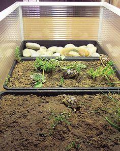 Tortoise Trust Web - Building a Tortoise Table