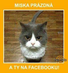 Miska prázdná a ty na facebooku!