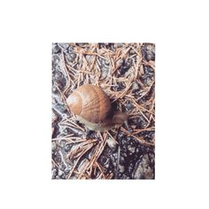 Sono andato a caccia di lumache.  Ne ho viste due ma mi son scappate sotto gli occhi.  #nature #pet #snailwhite #animal #moment #rain #rainyday #cold #shoot by http.epeters