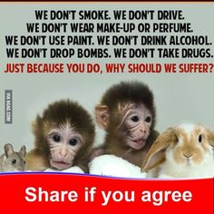 """a point to think about . say """"no"""" to animal testing. Be aware that most every product you purchase is tested on animals. Stop Animal Testing, Stop Animal Cruelty, Animal Testing Quotes, Mon Combat, Vegan Quotes, Vegan Memes, World Days, Animal Quotes, Animal Pics"""
