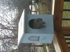 Squirrel in the Owl house