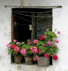 Window, Flowers & Child, Thimphu, Bhutan