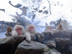 Ski all day, then hang with the monkeys in a Japanese onsen (hot spring). Not a bad idea for a winter holiday.