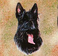 Pure Country 1175LS Scottie Pet Blanket Canine on Beige Background 54 by 54Inch *** Check out this great product.