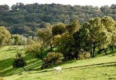 Descubre nuestro centenario paisaje de Dehesas.