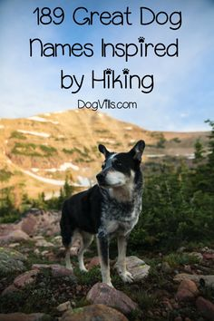 Dog Names Discover 189 Outstanding Hiking Dog Names for Males & Females- DogVills If youre looking for the best hiking dog names youre going to love this list! Check out over 180 brilliant ideas for male and female dogs! Dogs Names List, Funny Dog Names, Dog Names Male, Girl Dog Names, Cute Names For Dogs, Puppy Names, Pet Names, Funny Dogs, Cute Dogs