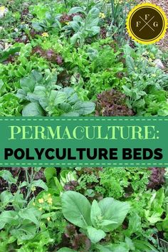 Permaculture: What is Polyculture + examples