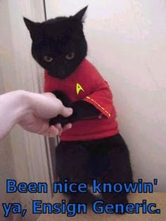 Poor Kitty in the Red Star Trek Shirt. Funny Cat Jokes, Funny Cat Videos, Cat Memes, Funny Cats, Funny Animals, Adorable Animals, Funniest Animals, Animal Funnies, Hilarious