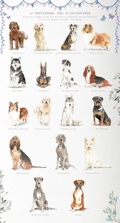 Muddy Paws Volume 2 - Dogs Galore by Twigs and Twine on Dog Illustration, Landscape Illustration, Digital Illustration, Fantasy Illustration, Mountain Dogs, Bernese Mountain, Leopard Dog, Floral Illustrations, Illustrations Posters
