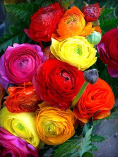 My new favorite flower- meet the ranunculus :) Breathtaking!!