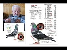 New collection of racing pigeons Pigeon Feed, Pigeon Loft, Racing Pigeons, Birds, Places, Youtube, Collection, Art, Passenger Pigeon