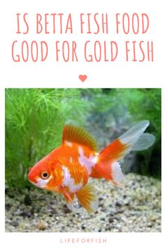 Find out what happens if your four betta fish eat goldfish food and discover the facts about whether your betta can eat goldfish food in this expert report. Nutrition Guide, Diet And Nutrition, Goldfish Food, Saltwater Aquarium Fish, Fishing For Beginners, Fish Care, Pet Tiger, Pet Fish, Fishing Life