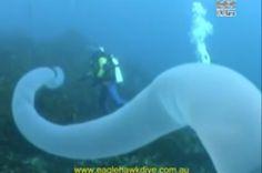 Giant, Tubular Creature Caught On Camera Under The Sea | IFLScience