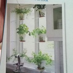 Glass shelving across kitchen window, herbs!
