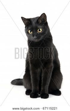 This is a guide about black cat photos and information. Often considered bad luck, these beautiful cats are still in abundance at shelters and often the last to be adopted. Black Cat Art, Cute Black Cats, Cute Cats, Pretty Cats, Beautiful Cats, Last Game Manga, Cat Heaven, Cat Reference, Cat Pose