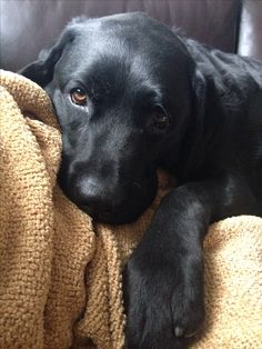 I love all dogs but my favorite is the black lab. I have one now she just turned a year. I lost one 15 months ago she was 12 years old and miss her terribly.