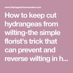 How to keep cut hydrangeas from wilting-the simple florist's trick that can prevent and reverse wilting in hydrangea bouquets!