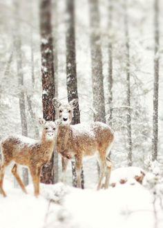 Tak zwierzęta radzą sobie z zimą (GALERIA)