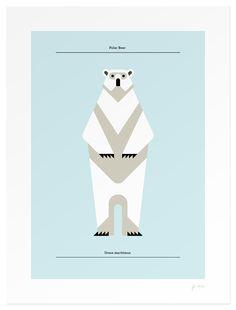Polar bear by Josh Brill