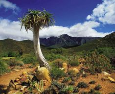 Karoo National Garden in Western Cape, South Africa.