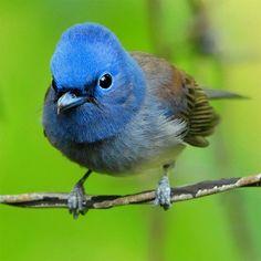 Colorful Animals, Colorful Birds, Cute Animals, Blue Flower Wallpaper, Bird Wallpaper, Samsung Galaxy Wallpaper, Samsung Galaxy S4, Jay Bird, Blue Bird