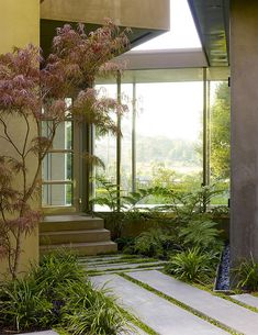 Japenese Maple, Moss, And Lush Ferns Meets Minimalist Lines. Japanese Maple    For ...