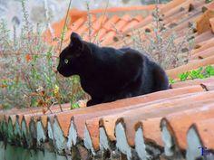 Gato negro sobre el tejado #Spain #CanaryIslands #GranCanaria