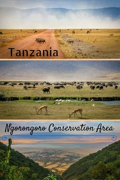 This UNESCO World Heritage Site is widely considered one of the world's most pristine wildlife sanctuaries. In fact, when you look down on the world's largest inactive, intact, and unfilled volcanic caldera from the viewing platform on its rim, the 100-square mile crater floor looks like open grassland virtually untouched by human hands since its formation two to three million years ago.